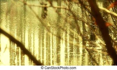 Zweige, wald, Reflexion