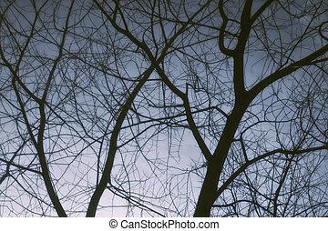 zweige, winter- baum, himmelsgewölbe, gegen, dunkel, bloß