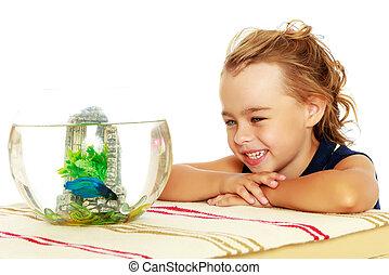 zwemmen, klein vissen, aquarium., blik, meisje
