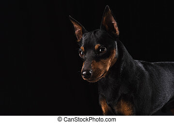 Close up portrait of a young dog.