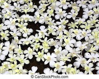 zwevend, bloemen
