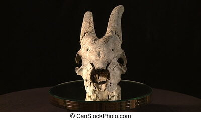zwierzęca czaszka