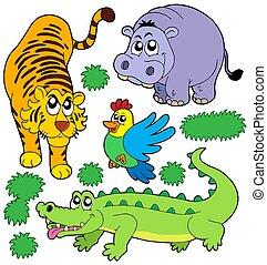 zwierzęta, 5, zbiór, ogród zoologiczny