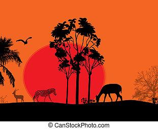zwierzęta, -, afryka, /, sylwetka, safari, dziki