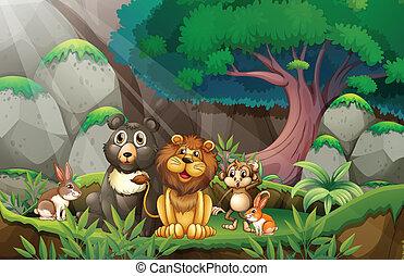 zwierzęta, dżungla