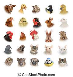 zwierzęta, i, ptaszki