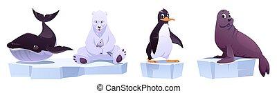 zwierzęta, kry, rysunek, wieloryb, lód, dziki, niedźwiedź