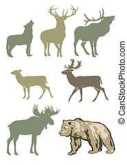 zwierzęta, las