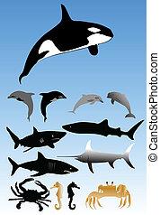 zwierzęta, morze, zbiór