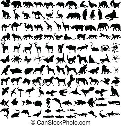 zwierzęta, sylwetka, zbiór