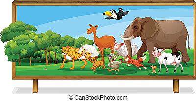 zwierzęta, w, dżungla, na desce