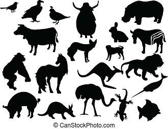 zwierzęta, wektor, czarnoskóry, silhouettes., jeden, stuknięcie, kolor, zmiana
