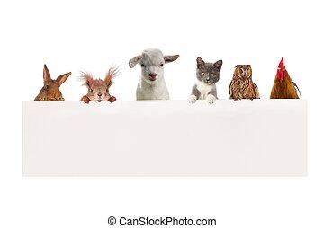 zwierzęta