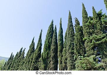 zypresse, bäume